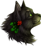 [Warrior Cats] Hollyleaf by Jeavieh