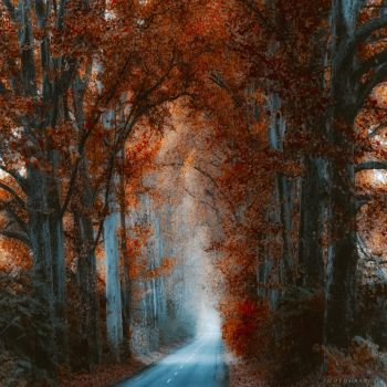 cathedral by ildiko-neer