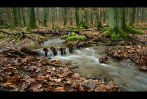 Forest Water by mARTinimal