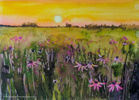 Sunset on Wildflowers by tracybutlerart