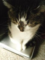 Daily Mews Photo - Router Cat - 27/8/2012 by akaLOLCat