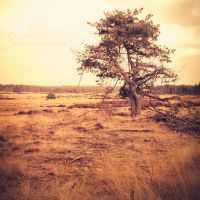 Lonely tree by TammyPhotography