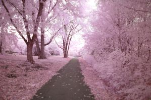 Cherry Blossom Way by photosynthetique