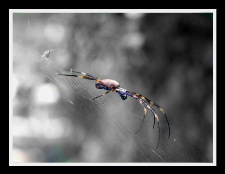 Incey Wincey by UnLeashed210