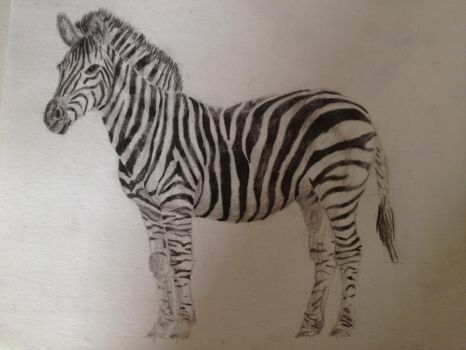 Zebra by sdr-art
