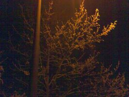 Tree In The Dark Light by fusuky