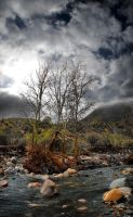Trees at Sycamore Creek by fuamnach