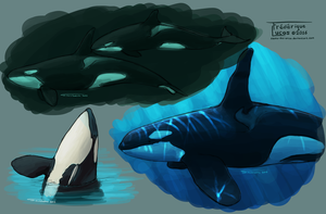 Some Killer whales by namu-the-orca