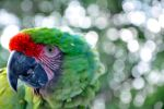 Green feathers V2 by Cele-Cam