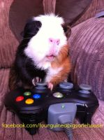 Rios the guinea pig on xbox 360 controller by AnimalNikki