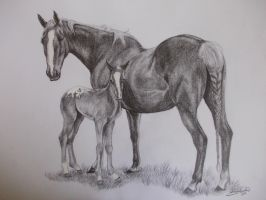 Mare and Foal by MiDestini