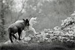 Sibling rivalry by Coigach