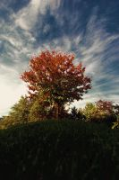 autumn by CityColors