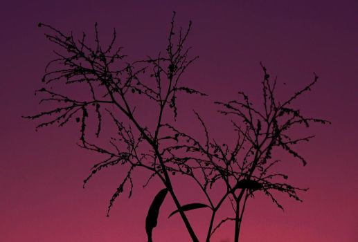 Branches of Wonder by Kaltias