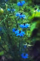Electric Blue by JustinDeRosa