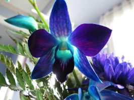 Deep Purple and Blue by Michies-Photographyy
