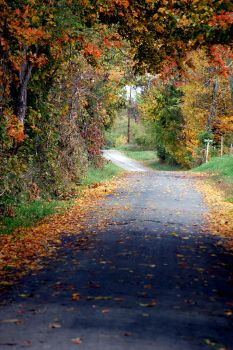 My Country Lane by EveCrucifiX