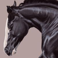 TWH Close Up by August-ana
