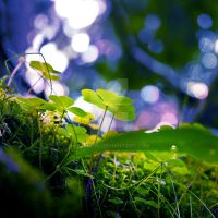 Deep in to forest 03 by rejmann