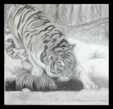 Tiger in the woods by nancybraun1997