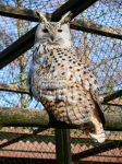 Eule _ owl by BVFoto