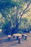 Picnic Grove by molybdenumstudios