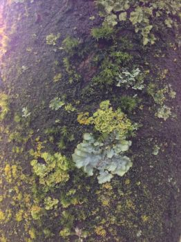 Moss and lichen on a tree by mountainliongrl