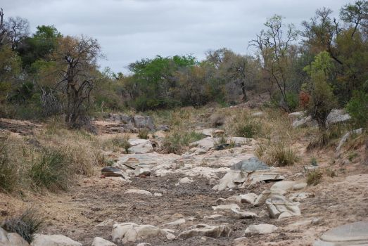Dry Riverbed by CompassLogicStock