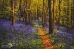Sunshine and bluebells by AngiWallace
