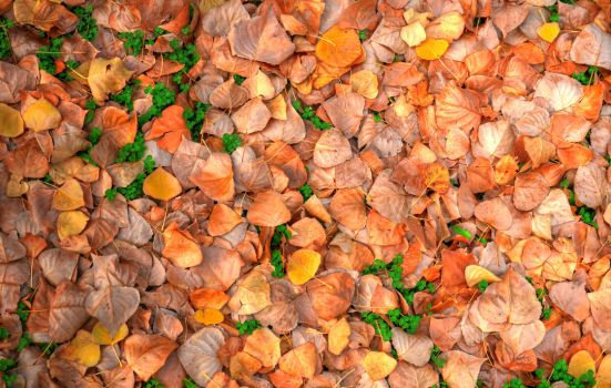 Autumn leaves covered ground HDR by AmmarkoV1