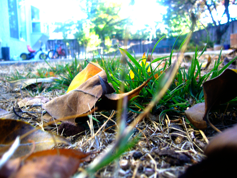 Grass, Leaves, and Stuff by The-Milan