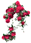 Red Roses Exclusive pack 2 by IgnisFatuusII