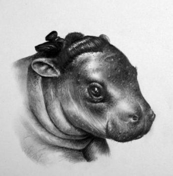 Horatio the Hippo by IleanaHunter