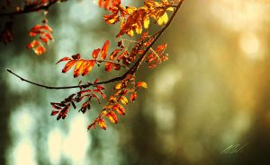 .autumns ending II. by awphotoart