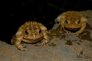 Toads by MiaLeePhotography