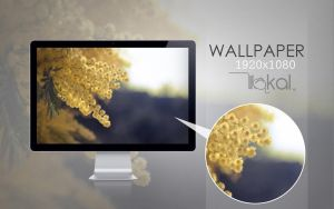 wall kalcolor by quikdone