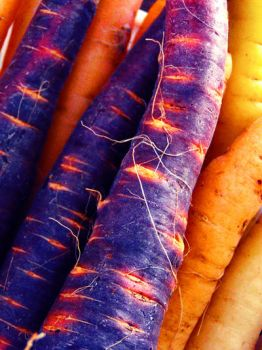 Fabulous Rainbow Carrots by golddew