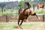 KM TB kicking out view from behind bit blurry by Chunga-Stock