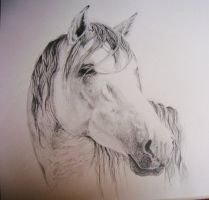 Horse by Opium01