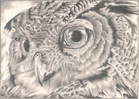 Eagle Owl Portrait by AlyWiish