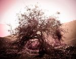 Yggdrasil - The Tree Of Life by RinoTheBouncer