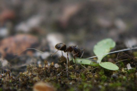 Little Ant by Nausicaae
